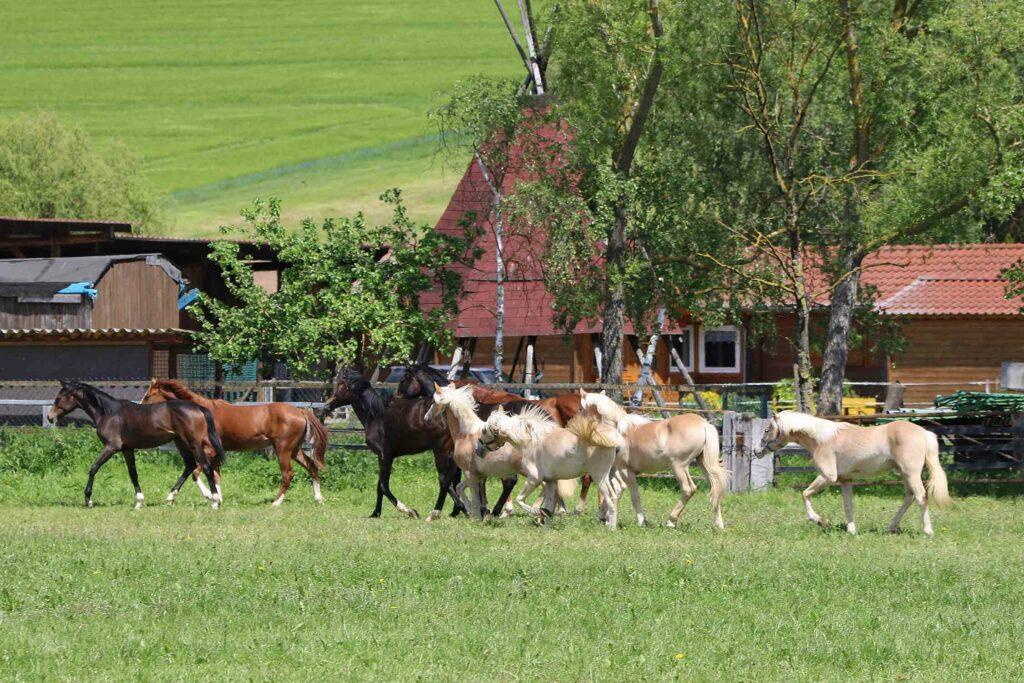 Galerie: Fohlenzeit auf dem Talhof
